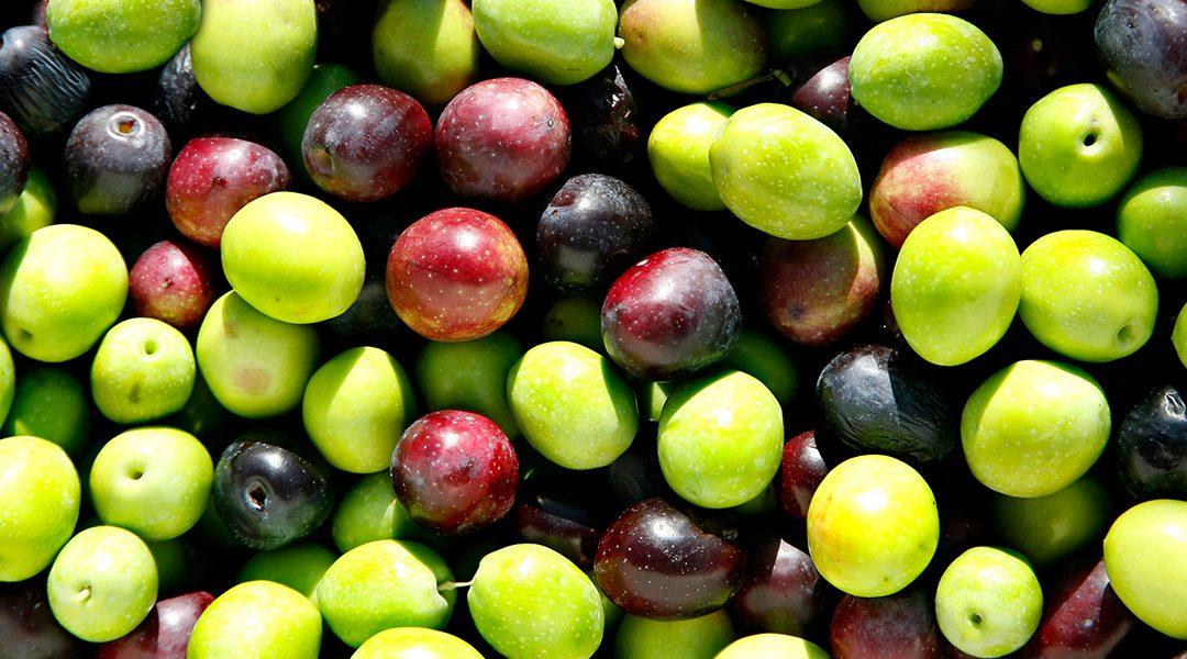 Diese 5 Inhaltsstoffe machen Olivenöl nativ extra so gesund